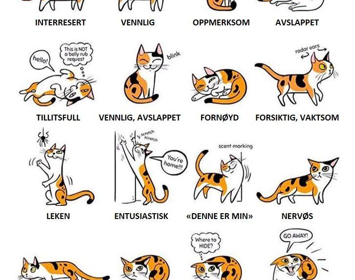 Kattens språk