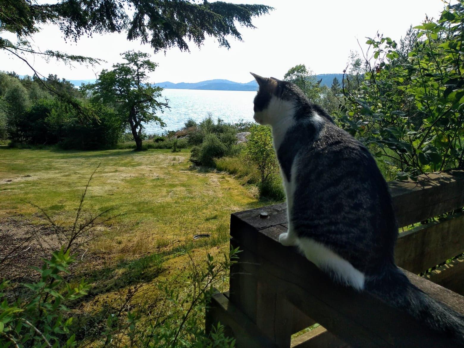 katt på rekkverk som ser utover hagen