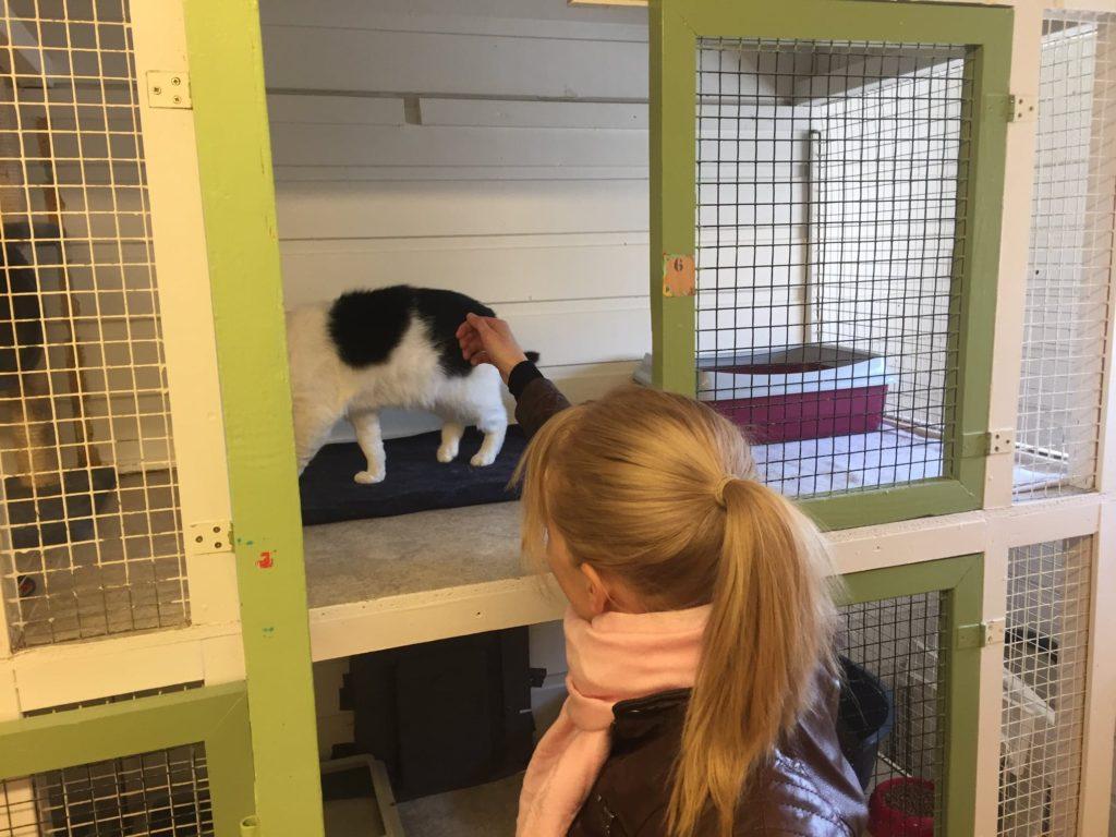 katt i bur mens jente klapper den