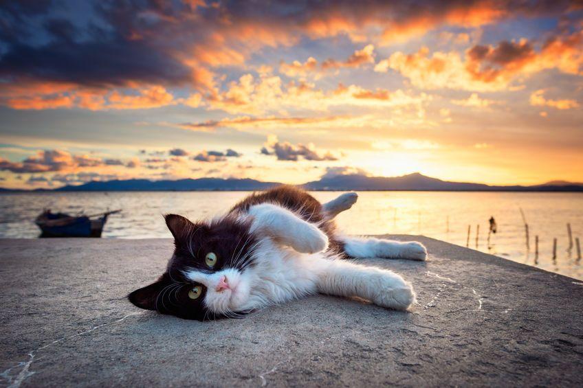 katt ligger på brygga med solnedgang i bakgrunnen